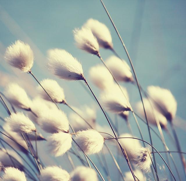 azure field