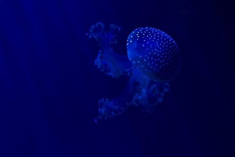 profondo-blu