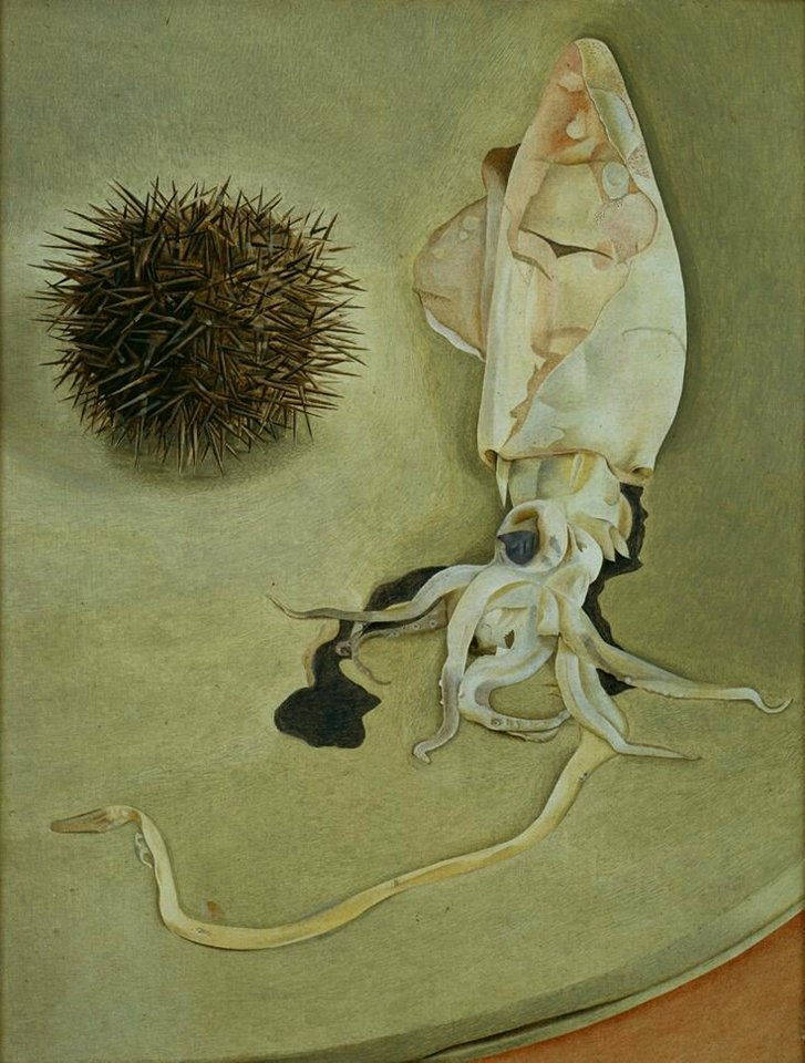 still life with squid and sea urchin lucian freud 1949